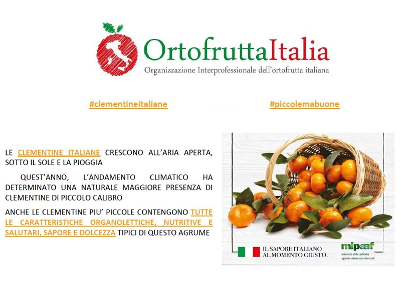 The MIPAAF reports a major sales crisis in the Italian Clementine sector Le Terre di Zoè