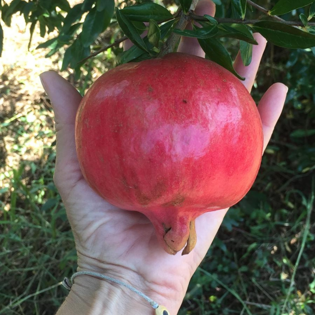 Melagrana Bio Qualità Jolly Red e Wonderfull in cassetta da 4,5Kg Le Terre di Zoè 1