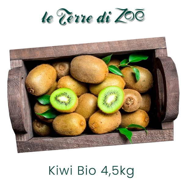 Organic Kiwi Hayward from Calabria in 4.5 kg boxes