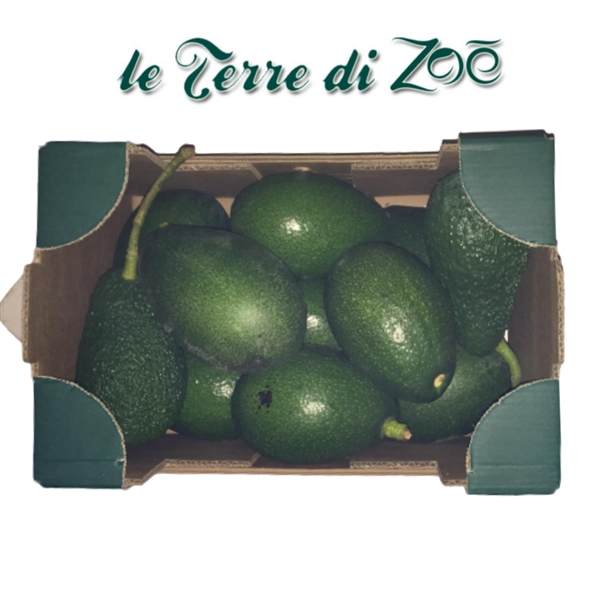 Organic Avocado from Calabria in 3 kg boxes