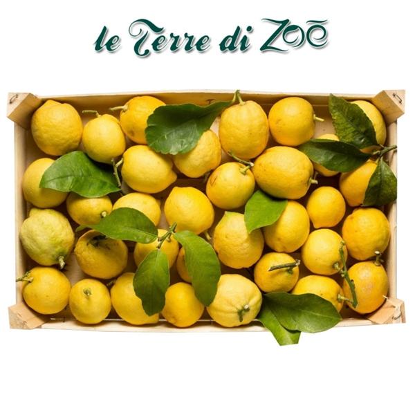 Limón de Calabria orgánica en caja de 9 kg